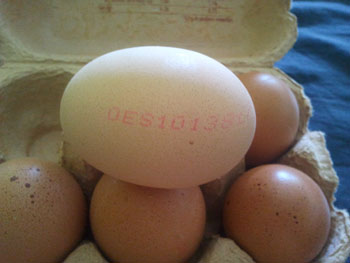 huevo ecologico español